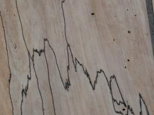 Trüffelbuchen Furnier, 3. Makroaufnahme