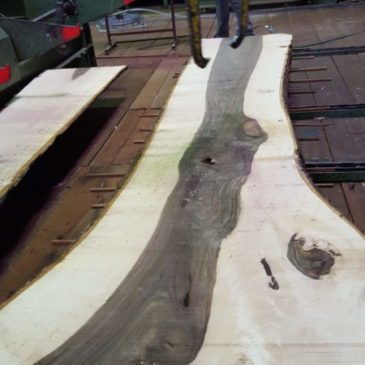 Refurbishment of a grandiose walnut strain…